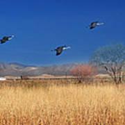 Cranes In Flight Poster