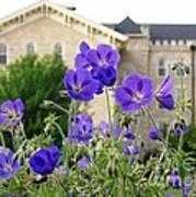Cranesbill Blue Geranium Poster