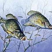 Crappie Brush Pile Poster by JQ Licensing