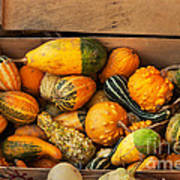 Crate Filled With Pumpkins And Gourts Poster