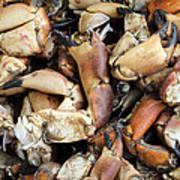 Crayfish Poster
