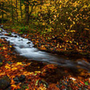 Creekside Colors Poster