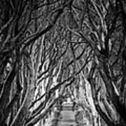 Creepy Dark Hedges Poster