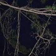 Creepy Tree Poster