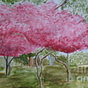Crepe Myrtles Poster by Katie Spicuzza