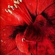 Crimson  Poster by Natalya Karavay