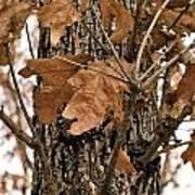 Crispy Leaves Poster