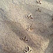 Critter Tracks In The Sand Poster