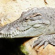 Crocodile Fractal Poster