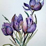 Crocus In April Poster by Mindy Newman