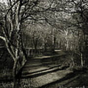 Crooked Tree Enchanted Path Poster