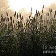 Crops In Fog Poster