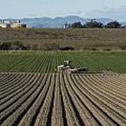 Crops In San Luis Obispo County Poster