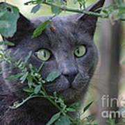 Cross Eyed Cat Poster
