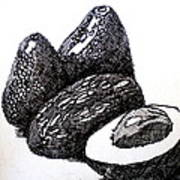 Crosshatched Avocados Poster