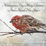 Crouching Finch Christmas Greeting Card Poster
