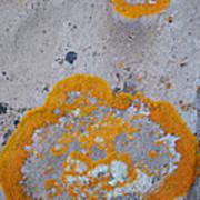 Crustose Lichen, Utah Poster