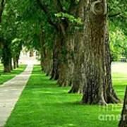 Csu Tree Path Poster