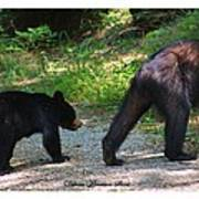Cub Following Mom Poster