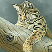 Curiosity - Young Bobcat Poster