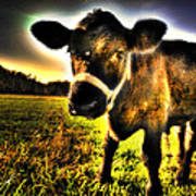 Curious Calf Dark Poster