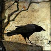 Curious Crow Poster