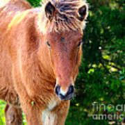 Curious Foal Poster