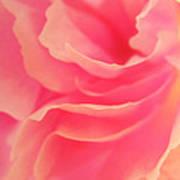 Curling Blossom Poster