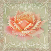 Curlyicue Peach Rose With Flourshis   Square Poster
