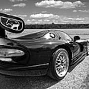 Curvalicious Viper In Black And White Poster