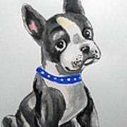 Boston Terrier Wall Art Poster