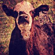 Cute Calf Grunge Poster