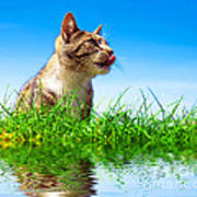 Cute Cat Outdoor Portait Poster