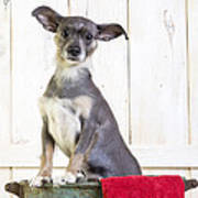 Cute Dog Washtub Poster