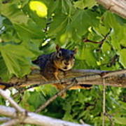 Cute Fuzzy Squirrel In Tree Poster