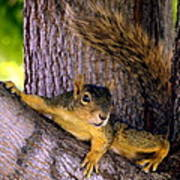 Cute Fuzzy Squirrel In Tree Near Garden Poster