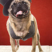 Cute Pug Dog In Vest And Top Hat Poster