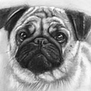 Cute Pug Poster by Olga Shvartsur