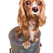 Cute Puppy Card Poster by Edward Fielding