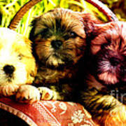 Cute Terrier Puppies Poster by Marvin Blaine
