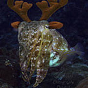 Cuttlefish With Reindeer Hat Poster