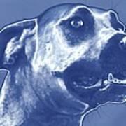 Cyanotype Dog Poster