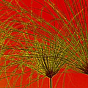 Cyperus Papyrus Abstract Poster