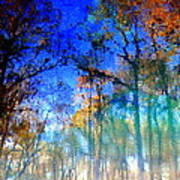 Cypress Fog 3 Poster