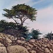 Cypress Garden Poster