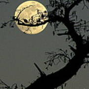 Cypress Moon Poster