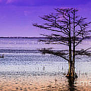 Cypress Purple Sky 2 Poster