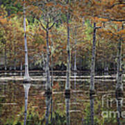 Cypress Tree Fall Reflections Poster