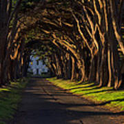 Cypress Tree Tunnel Poster