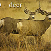 D Is For Deer Poster